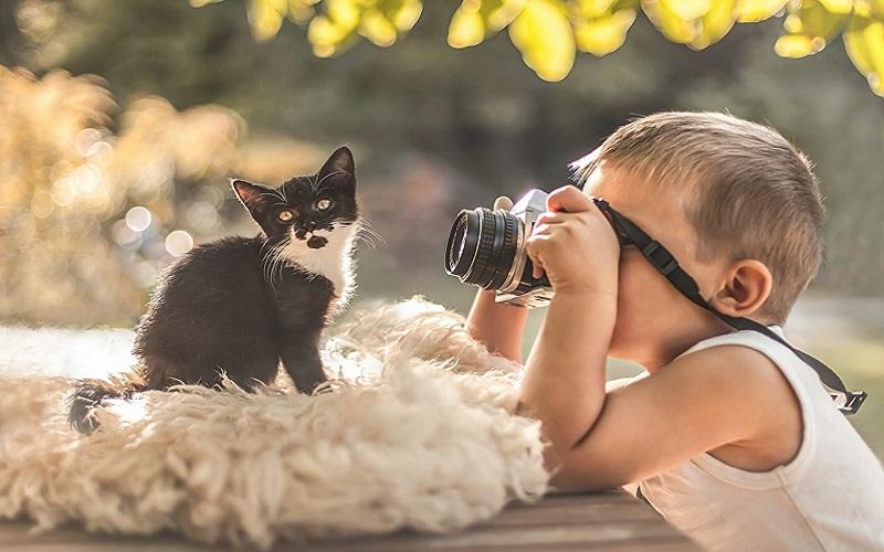 Cats_Kittens_Camera_505000